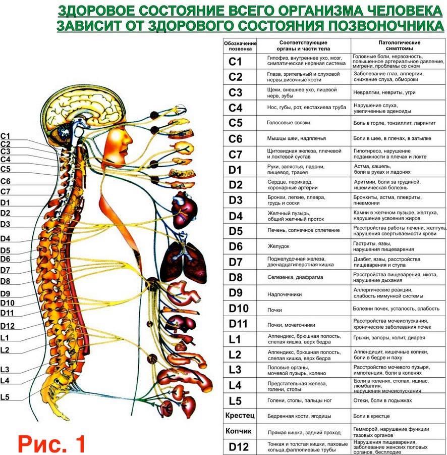Изображение Болезнь спины и внутренних органов