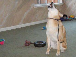 связь с другими собаками