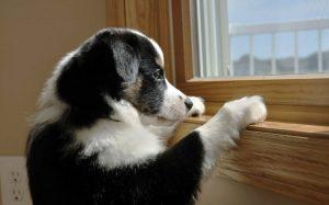 почему собака воет дома